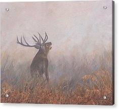 Acrylic Print featuring the painting Red Deer Stag Early Morning by David Stribbling