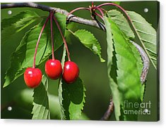 Acrylic Print featuring the photograph Red Delicious by Kennerth and Birgitta Kullman