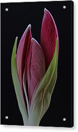 Red Divine Acrylic Print by Juergen Roth