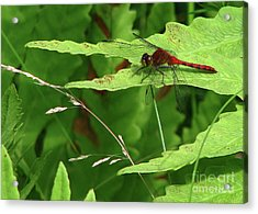 Acrylic Print featuring the photograph Red Dragon by Deborah Johnson