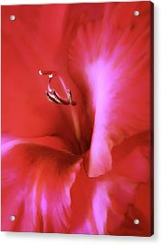 Red Dragon Gladiola Flower Acrylic Print by Jennie Marie Schell