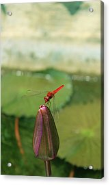 Red Dragonfly At Lady Buddha Acrylic Print