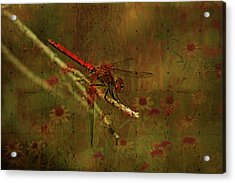 Red Dragonfly Dining Acrylic Print by Bonnie Bruno