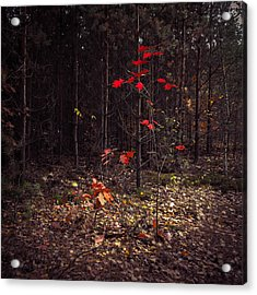 Red Drops Acrylic Print