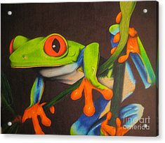 Red Eye Tree Frog Acrylic Print by Brian Schuster