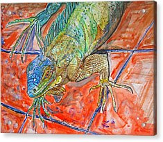 Red Eyed Iguana Acrylic Print by Kelly     ZumBerge