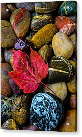 Red Fallen Leaf On River Stones Acrylic Print by Garry Gay
