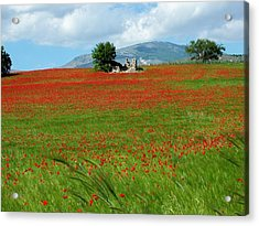 Red Fields Acrylic Print by Judy Kirouac