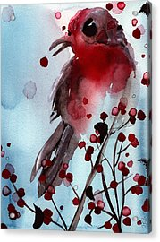 Red Finch In The Winterberry Acrylic Print