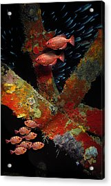 Red Fish On The Rhone Acrylic Print