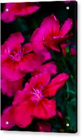 Red Floral Study Acrylic Print by David Lane