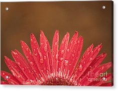 Red Flower 1 Of 2 Acrylic Print