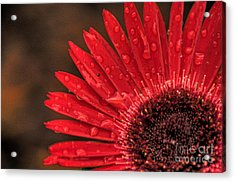 Red Flower 2 Of 2 Acrylic Print
