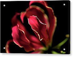 Acrylic Print featuring the photograph Red Flower 3 by Sheryl Thomas