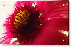 Red Flower Abstract Acrylic Print