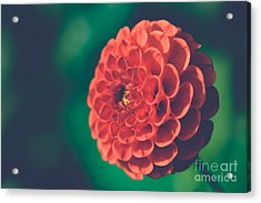Red Flower Against Greenery Acrylic Print
