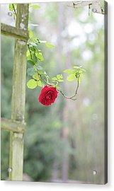 Red Flower Garden Acrylic Print
