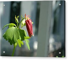 Red Flower Acrylic Print by Mark Platt