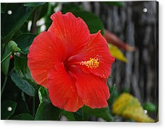 Acrylic Print featuring the photograph Red Flower by Rob Hans