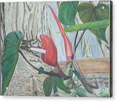 Red Flowering Vine Acrylic Print by Hilda and Jose Garrancho
