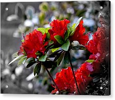 Red Flowers Acrylic Print by Aron Chervin