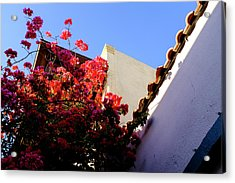 Red Flowers And Architecture In Saint Augustine Florida Acrylic Print