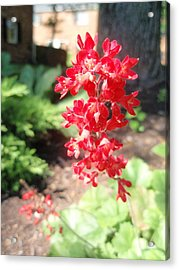Acrylic Print featuring the photograph Red Flowers by Beth Akerman