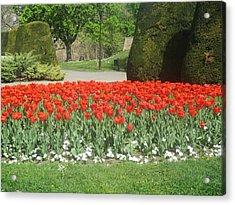 Red Flowers In The Kalemegdan Park In Belgrade Acrylic Print by Anamarija Marinovic