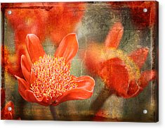 Red Flowers Acrylic Print by Larry Marshall