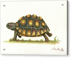 Red Footed Tortoise  Acrylic Print by Juan Bosco