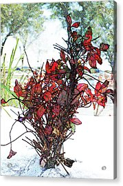 Red For The Winter Acrylic Print by James Granberry