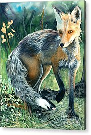 Acrylic Print featuring the painting Red Fox- Caught In The Moment by Barbara Jewell
