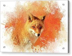 Acrylic Print featuring the photograph Red Fox by Eva Lechner