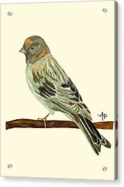 Red-fronted Serin Acrylic Print