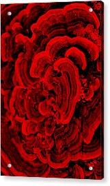 Red Fungi Acrylic Print by Dana  Oliver