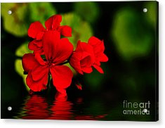 Red Geranium On Water Acrylic Print