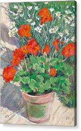 Red Geraniums Acrylic Print by Judy Adamson