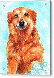 Red Golden Retriever Smile Acrylic Print