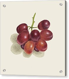 Red Grapes Acrylic Print by Carlee Lingerfelt