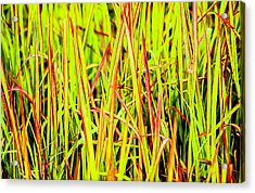 Red Green And Yellow Grass Acrylic Print