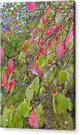 Red Green October Acrylic Print