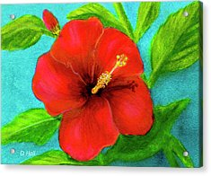 Red Hawaii Hibiscus #238  Acrylic Print by Donald k Hall