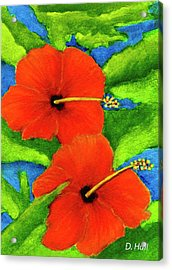 Red Hawaii Hibiscus Flower #267 Acrylic Print by Donald k Hall