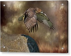 Acrylic Print featuring the photograph Red Hawk Down by Donna Kennedy