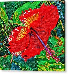 Red Hibiscus Aslant Acrylic Print