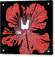 Red Hibiscus Flower In Three Dimensions Acrylic Print