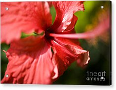 Red Hibiscus Macro Acrylic Print