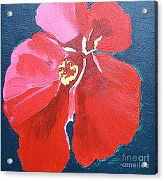 Red Hibiscus On Green Acrylic Print by Karen Nicholson
