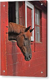 Red Horse Acrylic Print by JAMART Photography