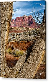 Red In The Distance Acrylic Print by Christopher Holmes